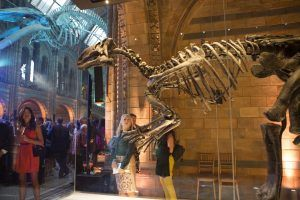 The Hintze Hall Reopens at the Natural History Museum | Create